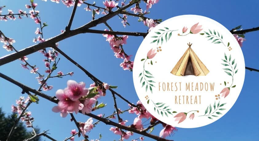 Spring has Sprung at Forest Meadow Retreat